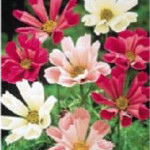 BEDDING PLANT SALE 2015 – Orders Due April 21
